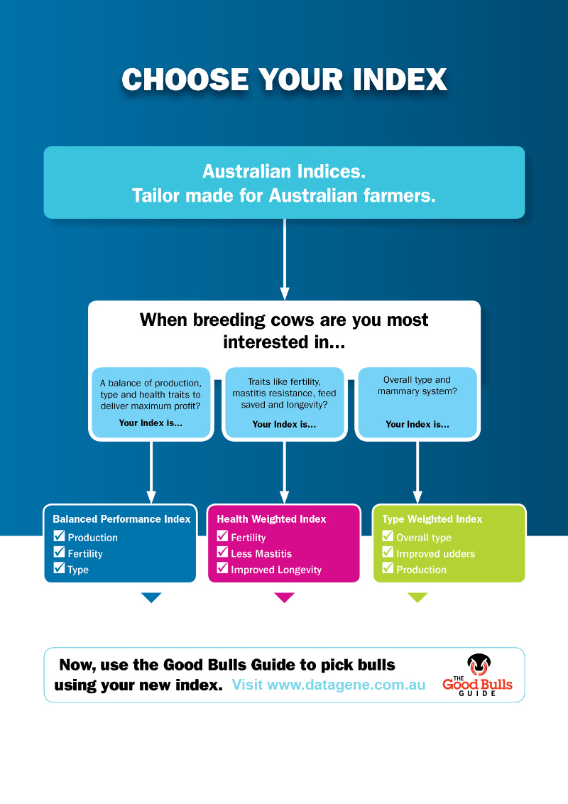 ADHIS0082 Good Bulls A4 Leaflet scaled for web DG